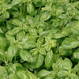 Pic of Basil dressing