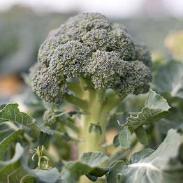 Pic of Broccoli cooked in red wine