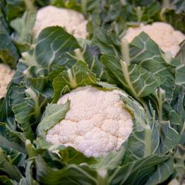 Pic of Steamed cauliflower served with Turkish tarator sauce