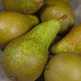 Pic of Pears in overcoats