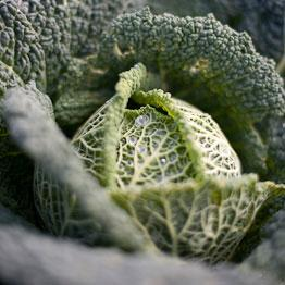 Pic of Creamed Savoy cabbage