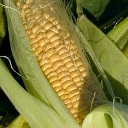 Pic of Chinese style sweetcorn