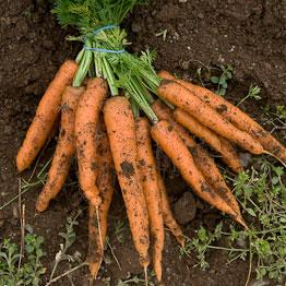 Pic of Baked carrots