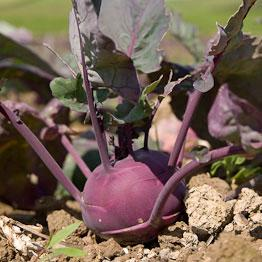 Pic of Kohlrabi in vinaigrette