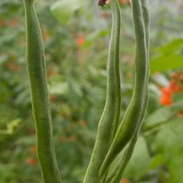 Pic of Runner beans with roast tomato sauce