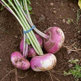 Sautéed turnips with cumin and lemon