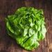 Green Batavia lettuce