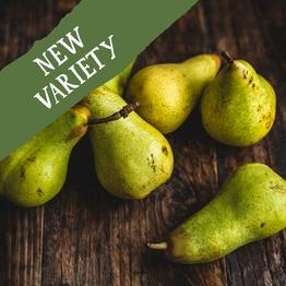 Abate pears 750g