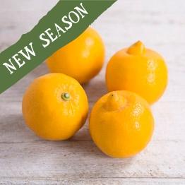 Bergamot lemons x4