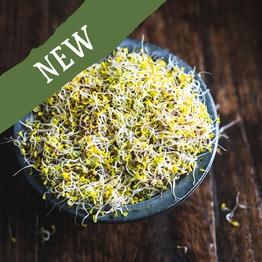 Broccoli sprouts 100g
