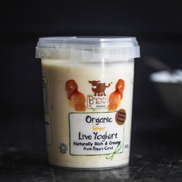 Brown Cow Organics ginger yoghurt