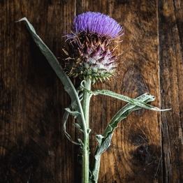 Cardoon flower x1