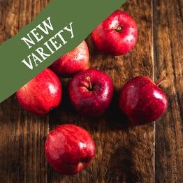 Dazzle apples 750g
