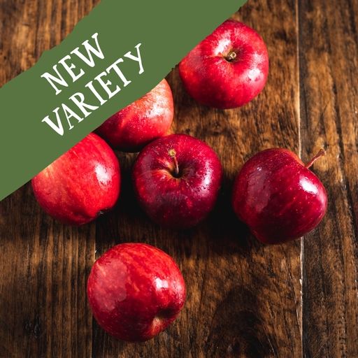 Dazzle apples 750g
