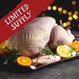 Turkey XL feeds 12-13
