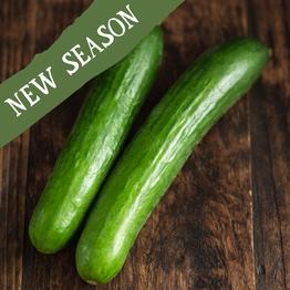 Mini cucumber x2