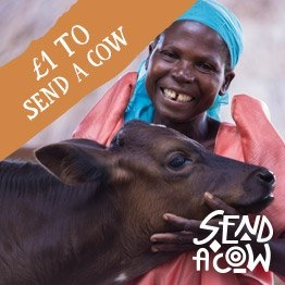 £1 donation to send a cow