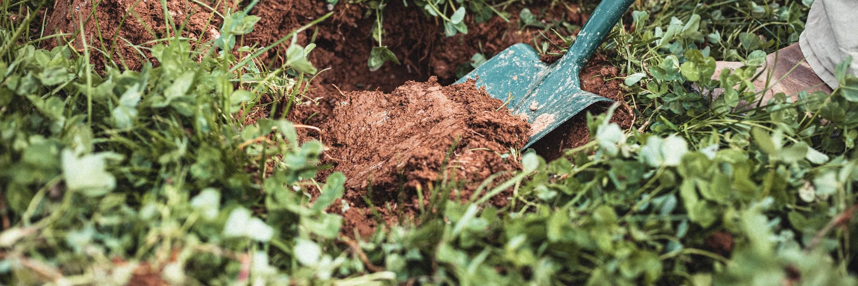 Spade digging into organic soil at Wash Farm in Devon