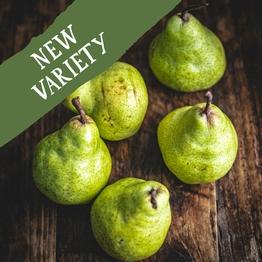 Packham pears 750g