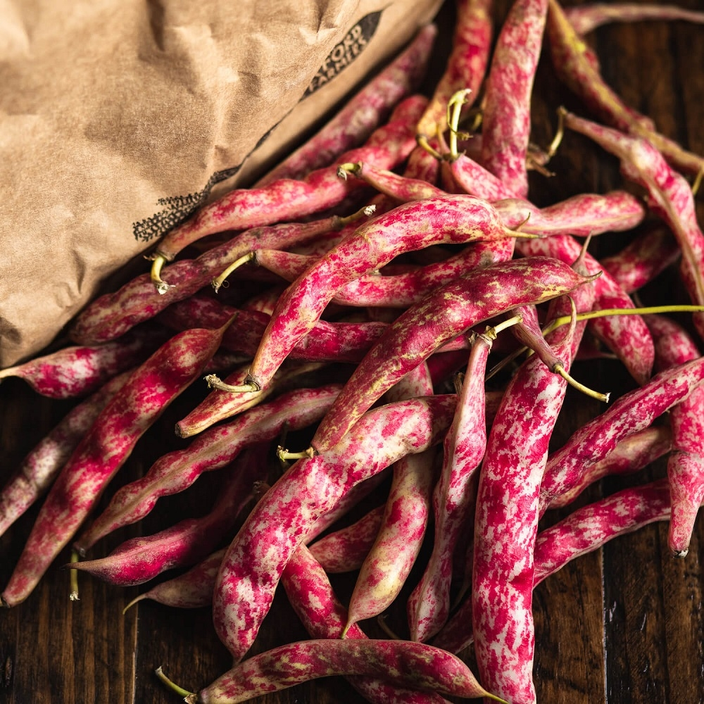 Image of Borlotti beans being produced