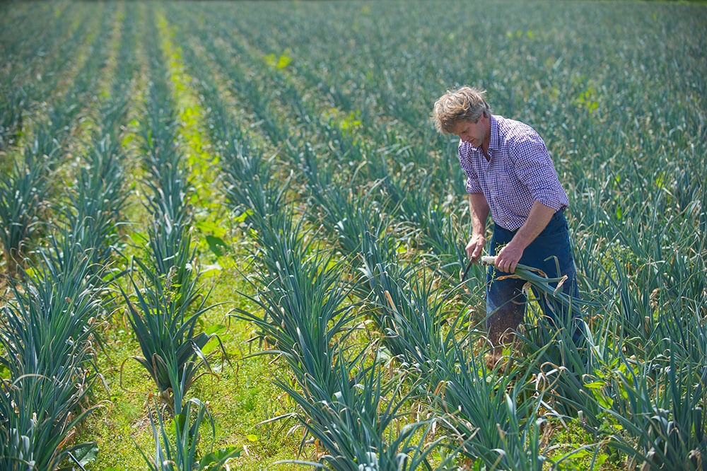 Image of Leeks being produced
