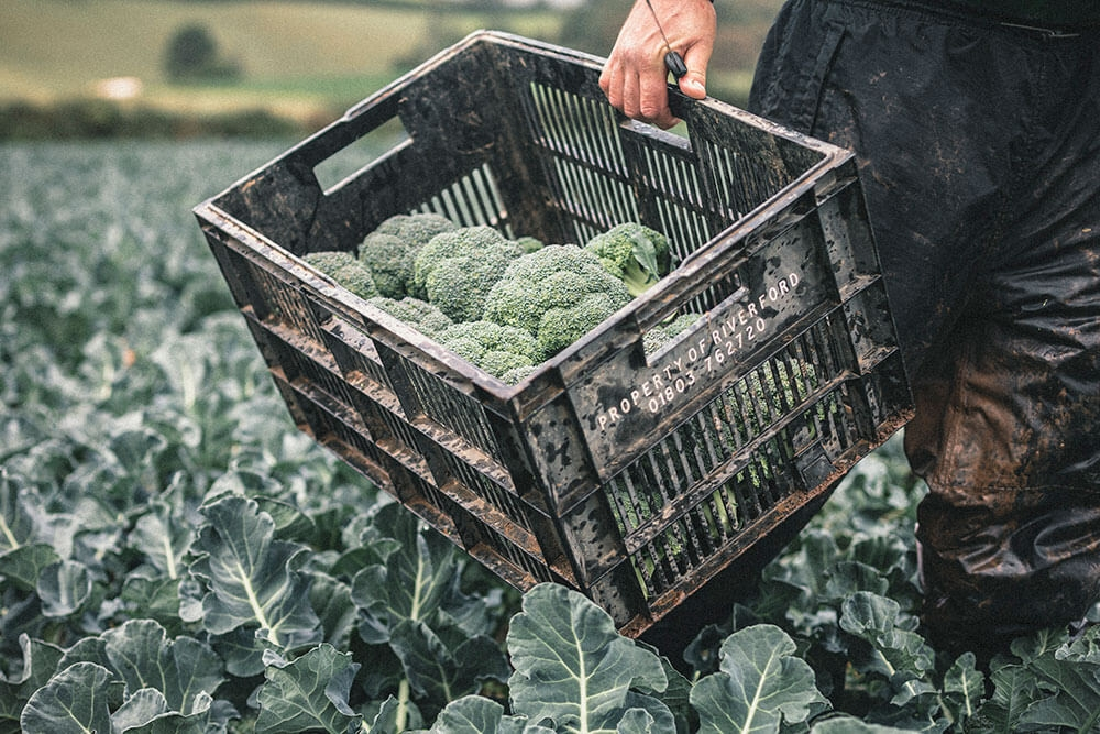 Image of Broccoli being produced