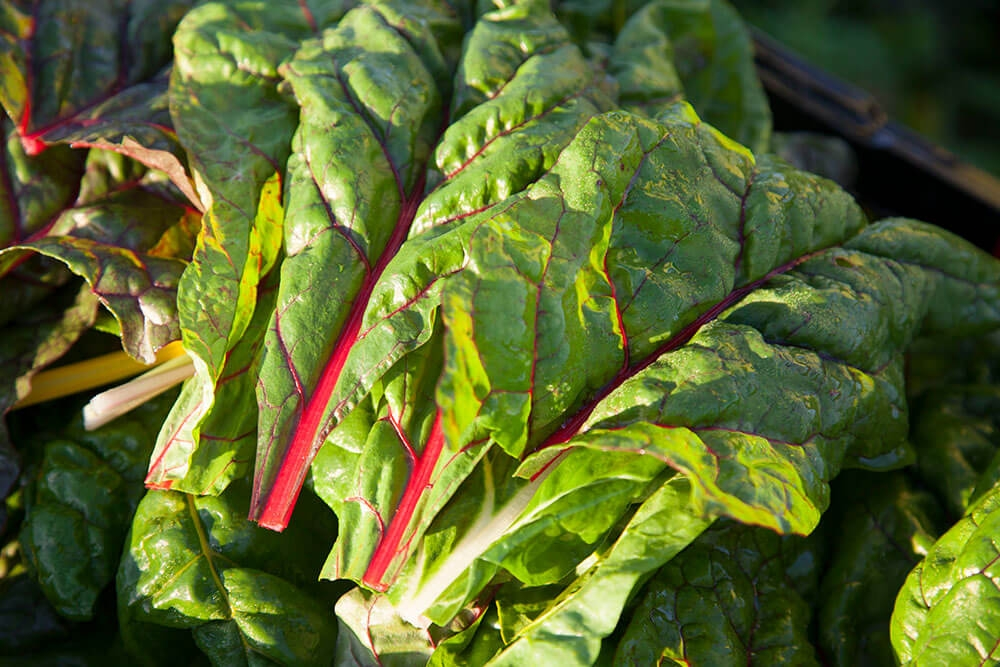 Image of Chard being produced