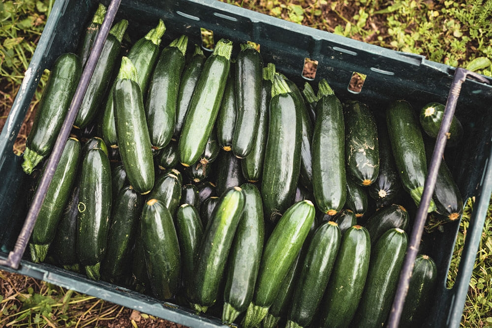 Image of Courgette being produced