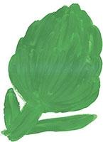 Hand drawn image of Globe artichoke