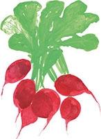 Hand drawn image of Radish