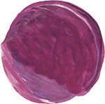 Hand drawn image of Red cabbage