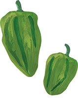 Hand drawn image of Padron pepper