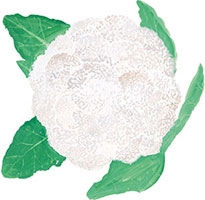 Hand drawn image of Cauliflower
