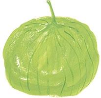 Hand drawn image of Tomatillo