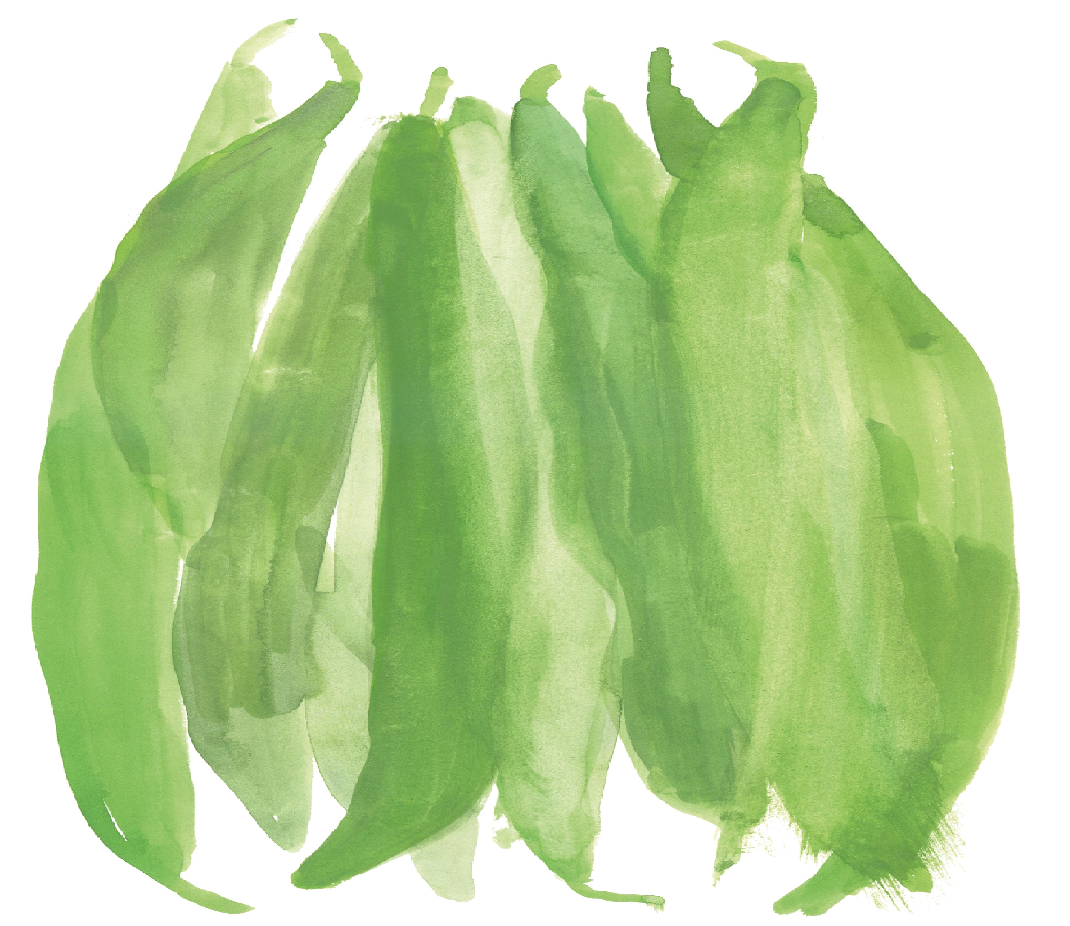 Hand drawn image of Sugar snap peas