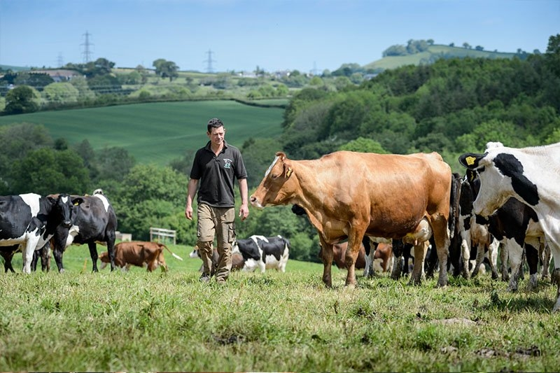 The Riverford Dairy provide us with fresh organic milk, cream and natural yogurt from their pasture-reared herd in Devon.