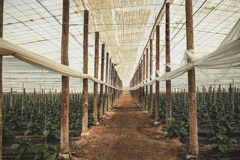 Inside one of Naturcharc's polytunnels on their farm in Spain
