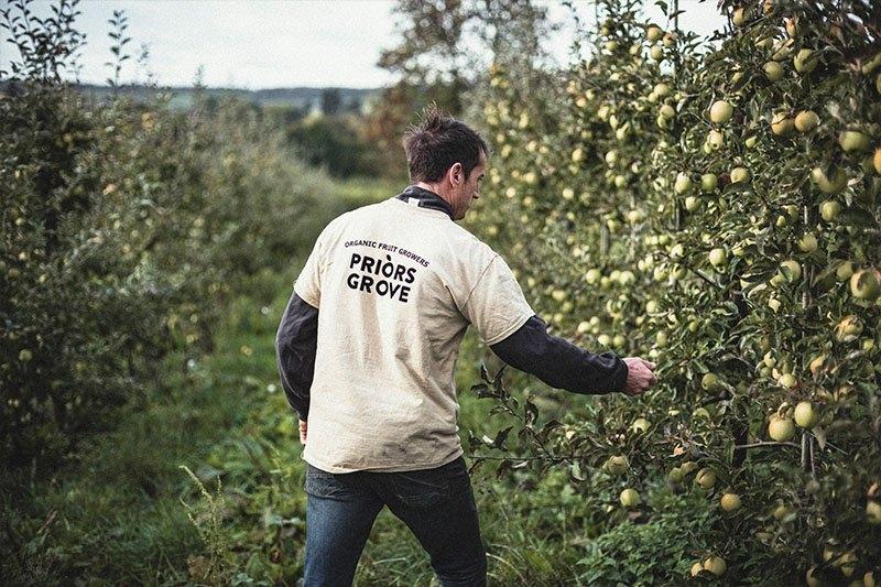 Joe checking apples on Priors Grove Farm