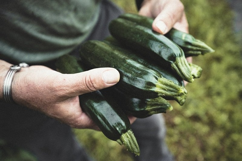 Organic courgettes from Antony's farm