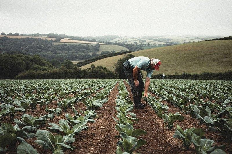 Andrew Maciver-Redwood tending to his crops