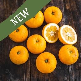 Seville Oranges for marmalade 1kg